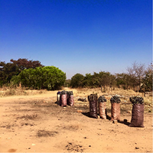 Charcoal production in Zambia