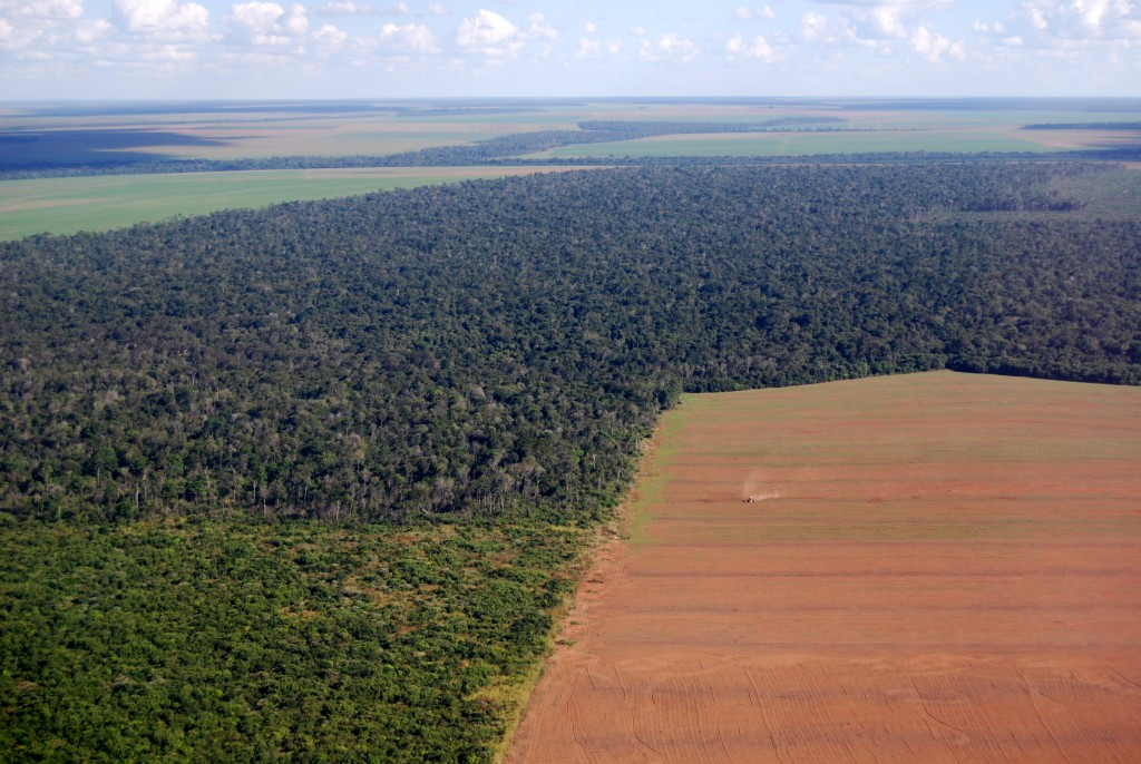 Eliminating deforestation in Brazil demands further ambitious action
