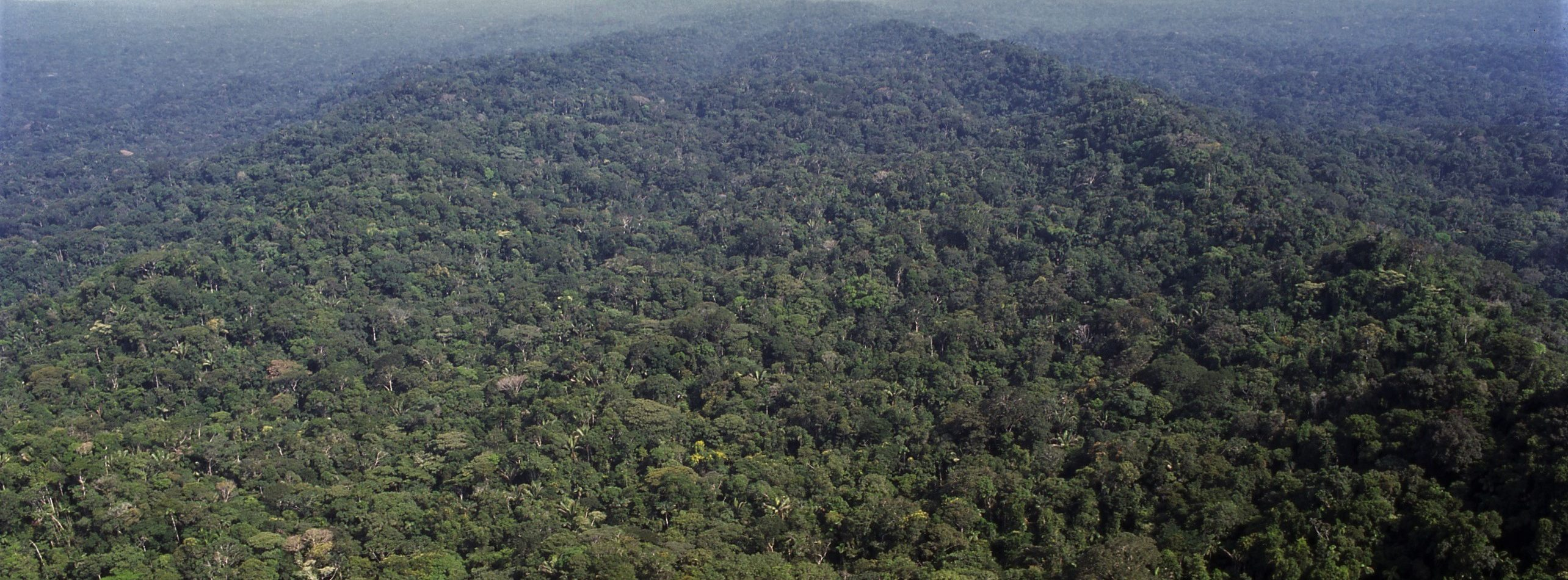 The Story of the Surui Forest Carbon Project