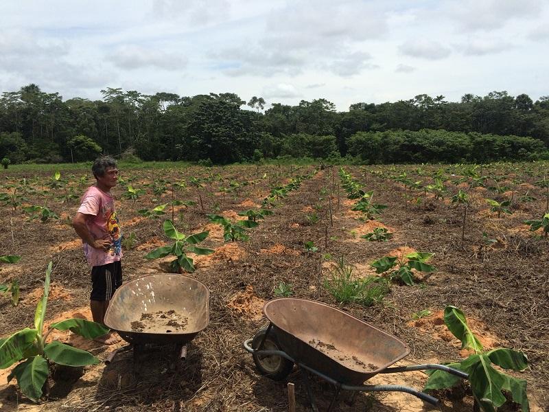 7_Tambopata_cocoa growing