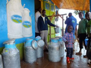 Children bring milk from their parents' farms to the Kaptama Farmers' Cooperative