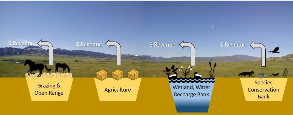 Farm and ranch land revenues can diversify and grow once markets for ecological assets like wetlands, aquifer recharge and species credits are considered.