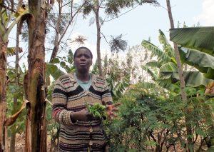 Prisca Mayende gathers fodder on her tree-dense farm