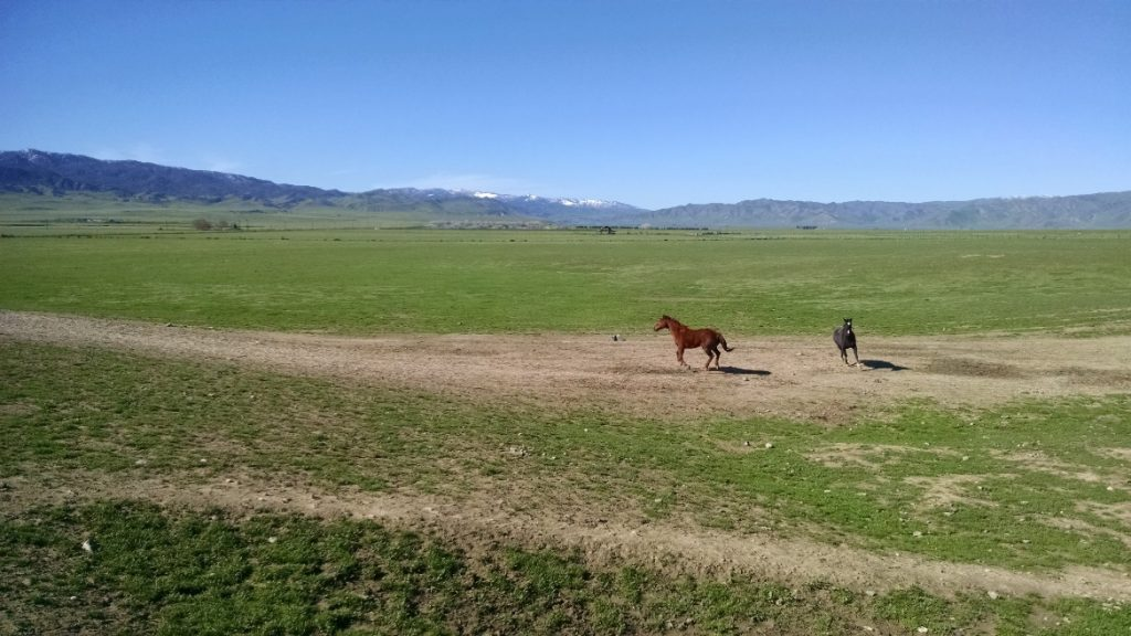 Sale value more than tripled for this California horse ranch after eco-asset values were inventoried.