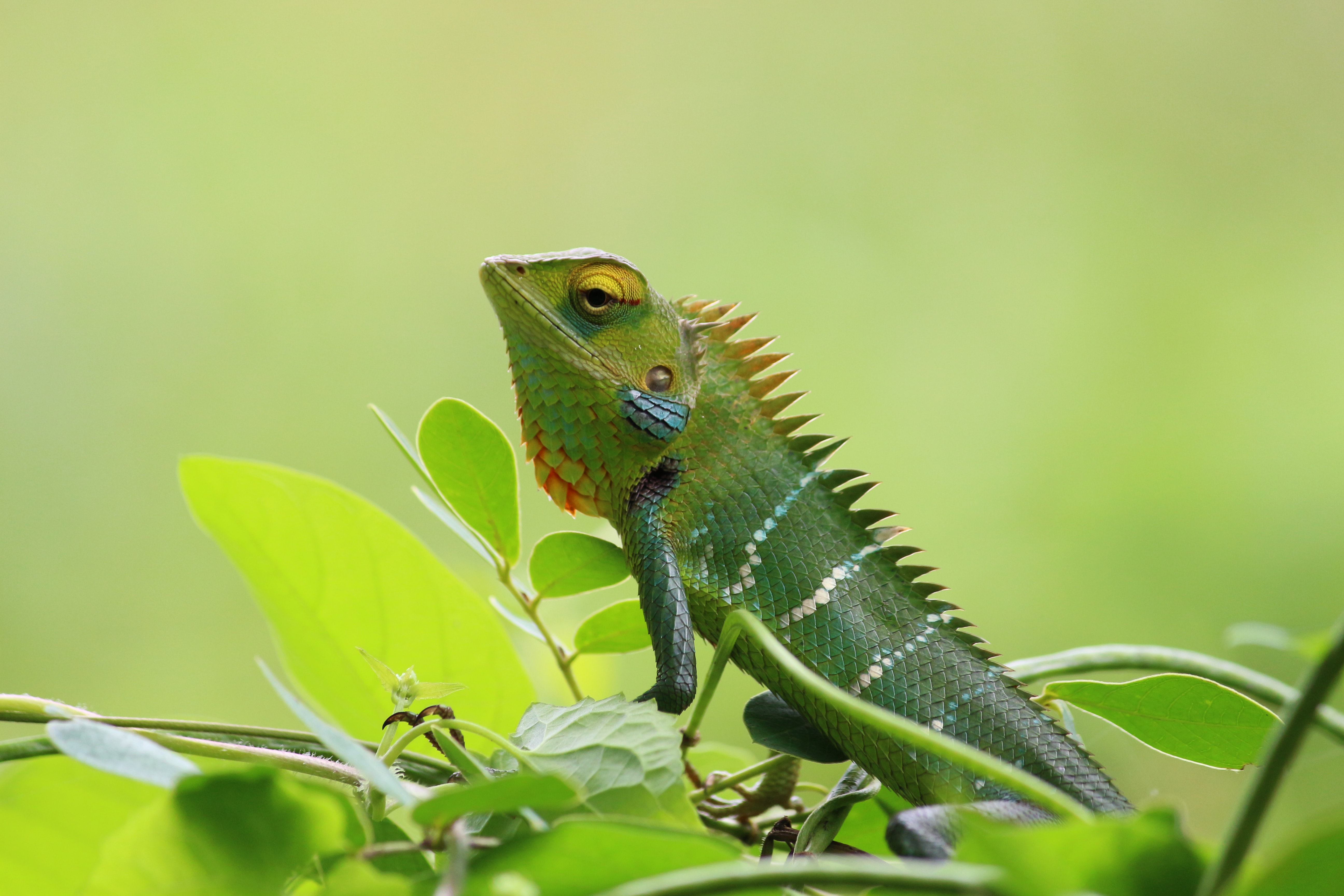 Business and Biodiversity Offsets Program launched