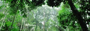 Forest Trends partners with Acre, Brazil on a first for climate finance